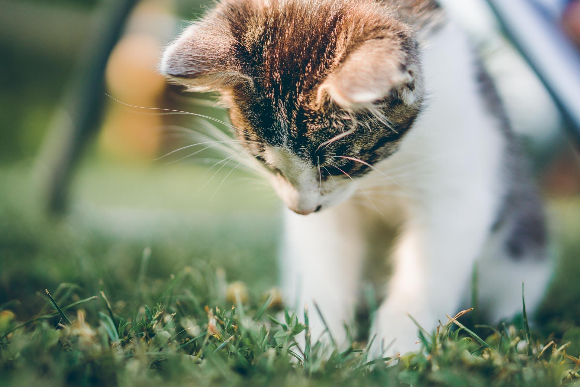 Detailfoto einer Katze bei der Hochzeitsfeier